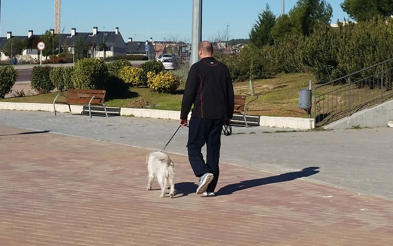 Cómo sacar al perro o ir a la compra durante el estado de alarma