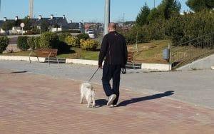 Hombre paseando al perro junto al Auditorio Miguel Ríos de Rivas