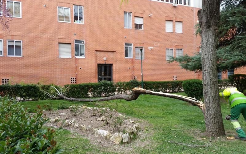 Caída de una rama por el viento en Covibar