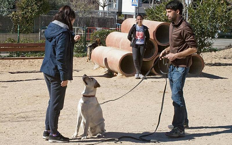 Adiestrar un perro como alternativa al botellón