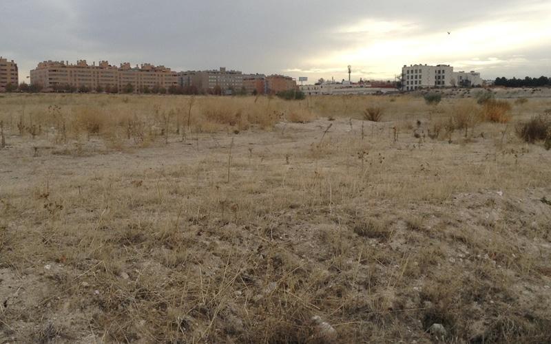 La futura ciudad deportiva del barrio de la Luna, dato a dato