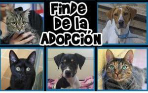 Finde de la adopción de perros y gatos Rivanimal
