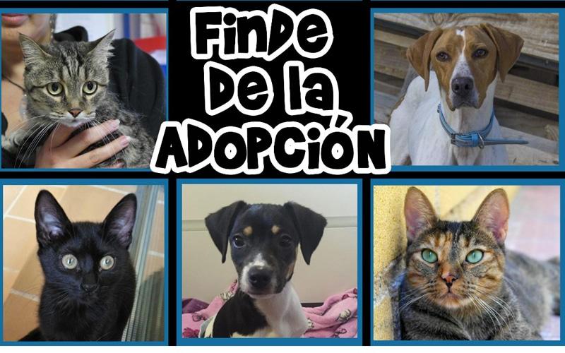 Rivanimal organiza un 'finde' de adopción de perros y gatos