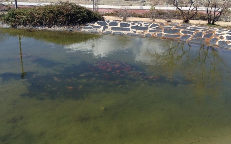 Rivas pondrá carteles en las fuentes públicas para evitar el abandono de peces