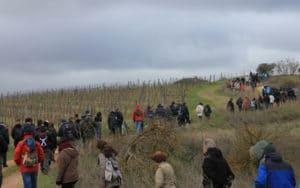Ruta por los restos de la Batalla del Jarama (Fuente: Carpetana Comunicación).