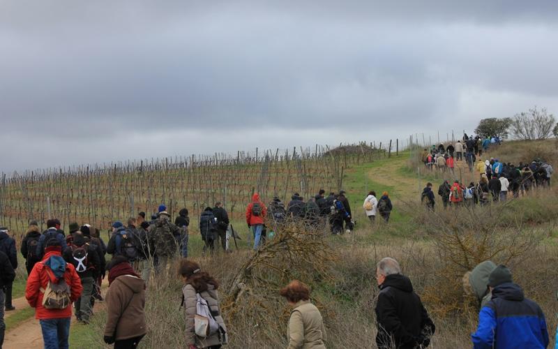 Ruta por los restos de la Batalla del Jarama en Morata de Tajuña (Fuente: Carpetana Comunicación)