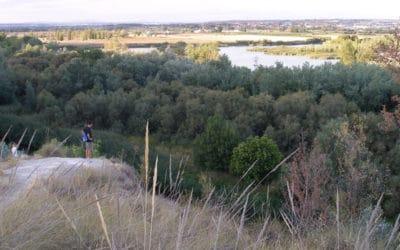 Disfruta el fin de semana: planes para todos en el Sureste de Madrid