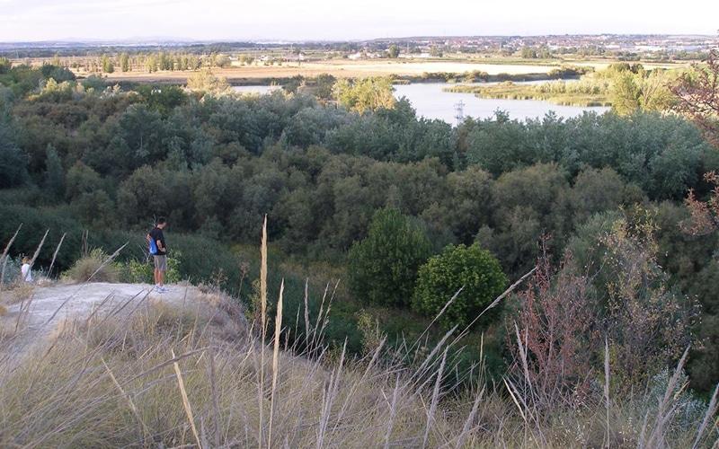 El Espartal de Rivas (Fuente: Ayuntamiento de Rivas Vaciamadrid)