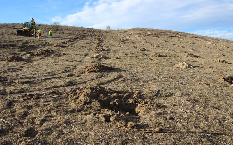 Plantación en el bosque Scania (Fuente: Rivamadrid)