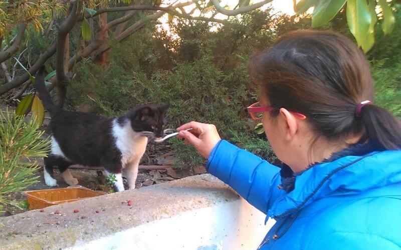 Una voluntaria alimenta a un gato en la colonia de Monte Ciruelo-Parque Asturias