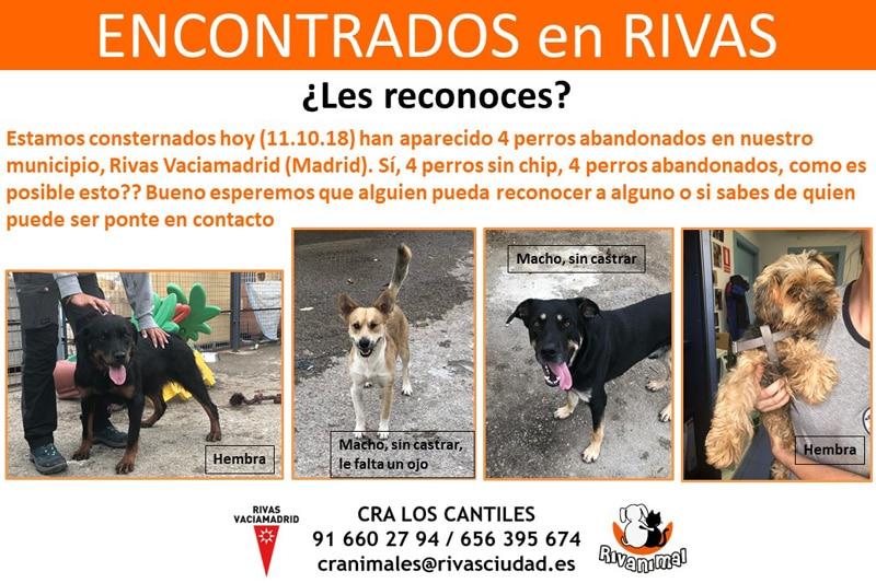 Cuatro perros abandonados en Rivas