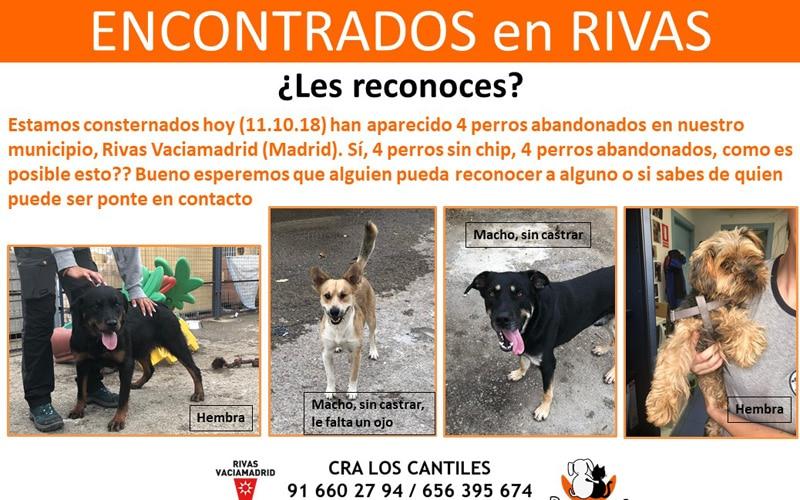 Encontrados en Rivas cuatro perros abandonados en un solo día