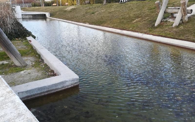 Estanque del Parque Lineal de Rivas Vaciamadrid