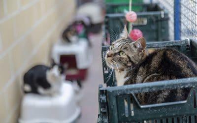 Las familias ripenses adoptaron 600 animales de Los Cantiles, la mayoría perros y gatos, en 2018
