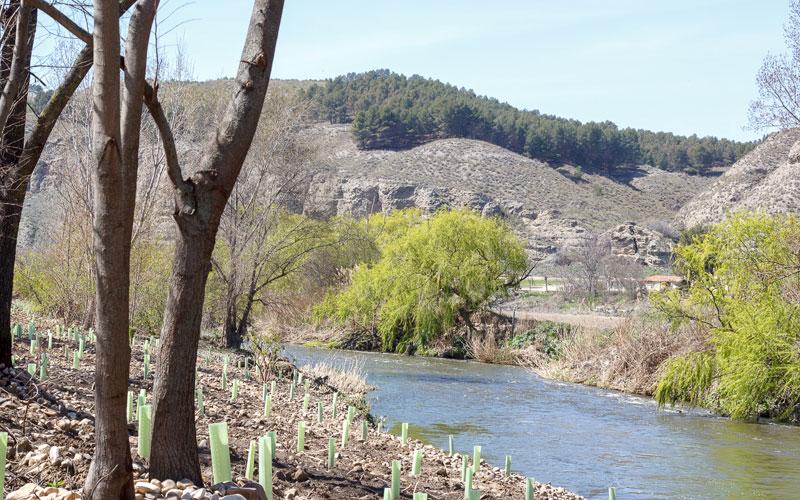 Soto de las Juntas (Foto: María Fabra)