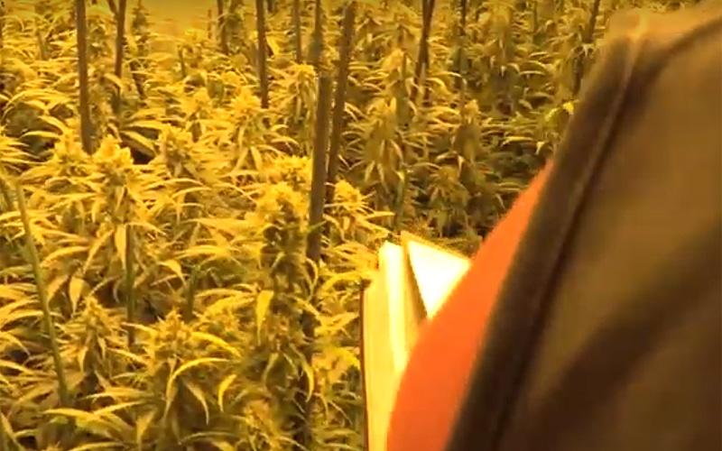 Desarticulado un conocido clan dedicado al cultivo 'indoor' de marihuana en la Cañada