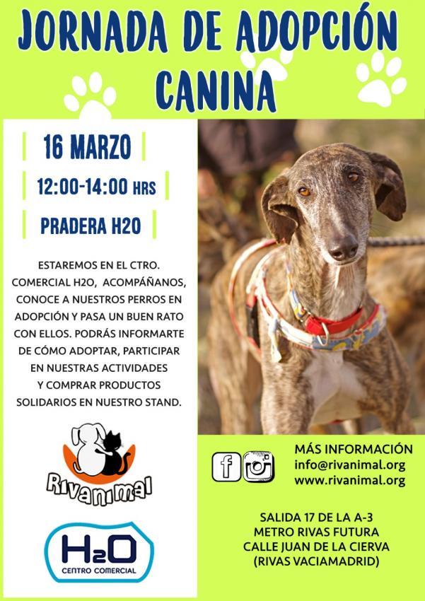 Jornada de adopción de perros de Rivanimal