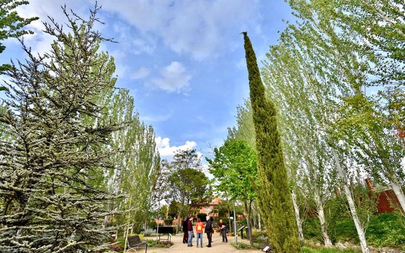 Rivas reestrena su arboretum, un pequeño jardín botánico en la ciudad