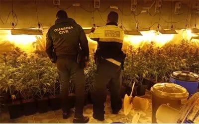 Desmantelados dos locales en la Cañada Real donde se cultivaban cientos de plantas de marihuana