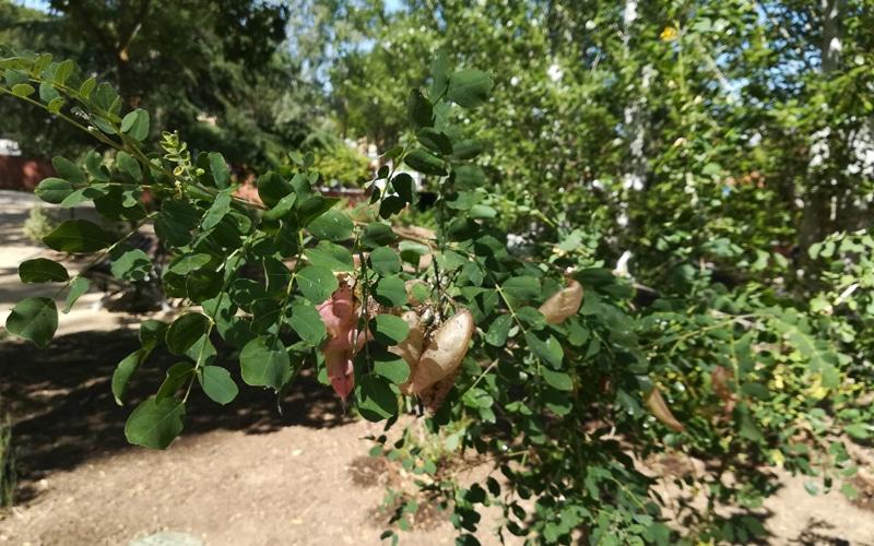 arboreto rivas vaciamadrid especies