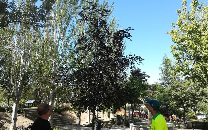 arboles arboreto rivas vaciamadrid