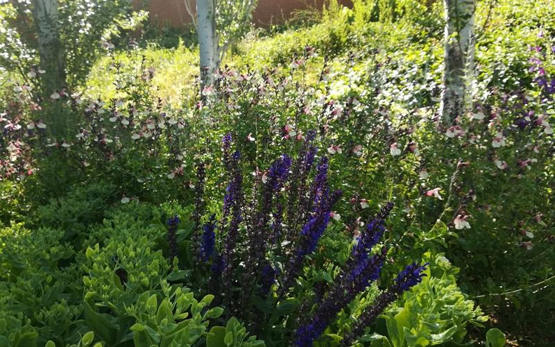 flores arboreto rivas vaciamadrid botanico