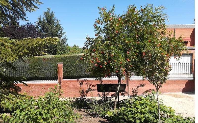 granado arboreto rivas botanico