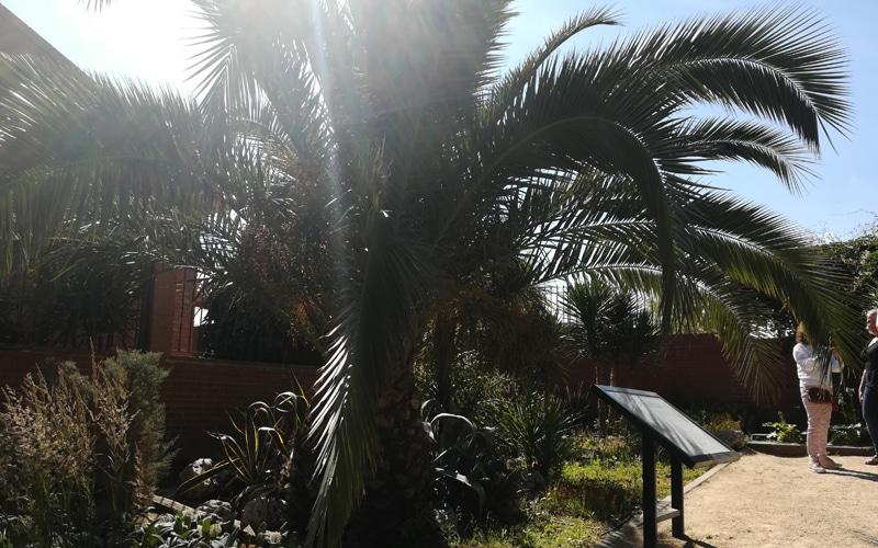 palmera arboreto rivas vaciamadrid botanico