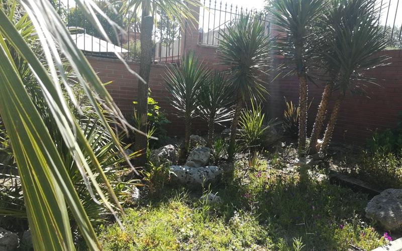 palmaceas arboreto rivas vaciamadrid botanico