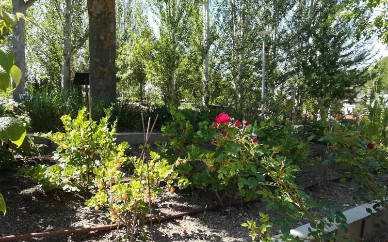 rosas arboretum arboreto rivas vaciamadrid botanico