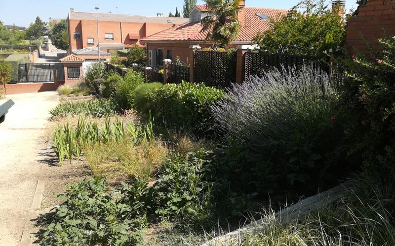 setos arboreto arboretum rivas vaciamadrid botanico