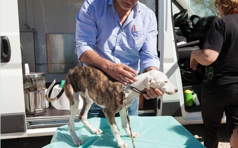 Rivanimal alerta del incremento de animales sin hogar por los realojos de la Cañada