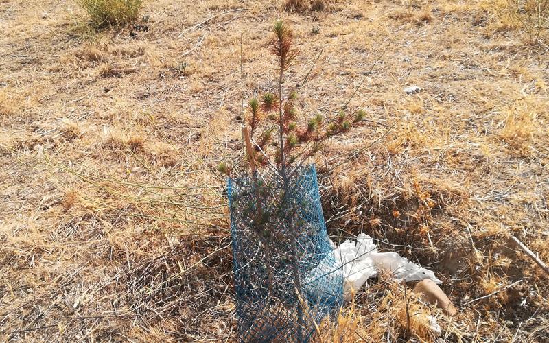 Movilización vecinal en Rivas para salvar 500 árboles plantados hace menos de dos años