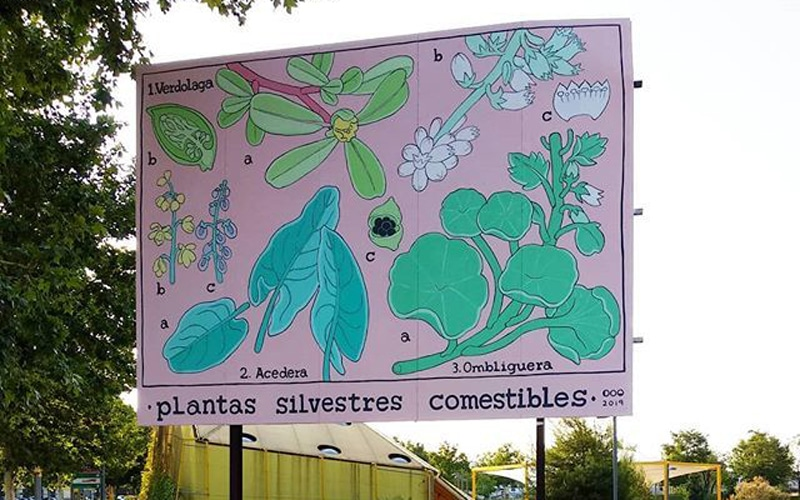 plantas silvestres comestibles rivas arte