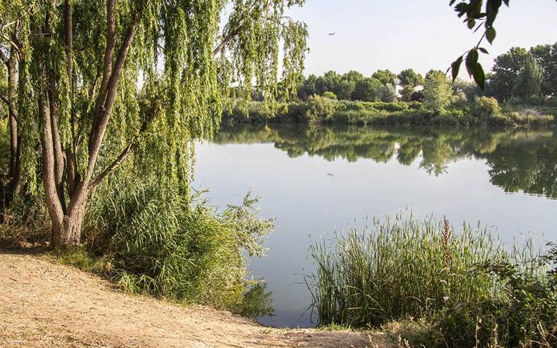 'Invierno en el sureste' descubre las lagunas de Velilla