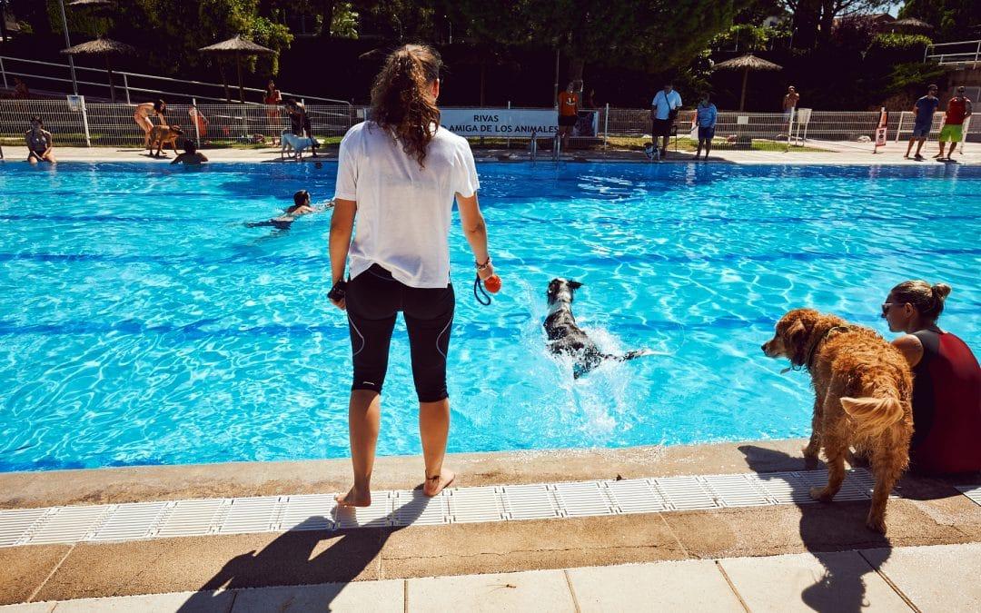 Este finde, chapuzón perruno en la piscina del Olivar de la Partija