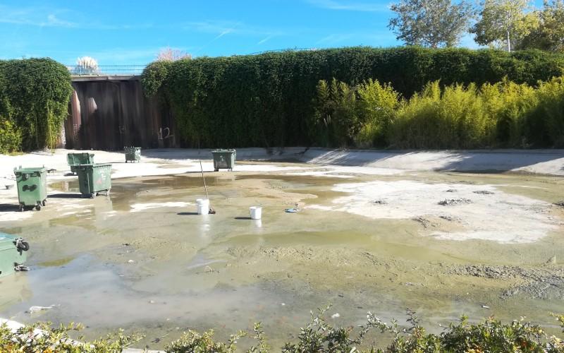 estanque parque bellavista peces limpieza