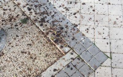 Vecinos del barrio de la Luna protestan por unos árboles que causan «suciedad» en sus viviendas