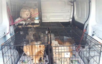 Rivanimal se hace cargo de una veintena de los perros rescatados en Arganda