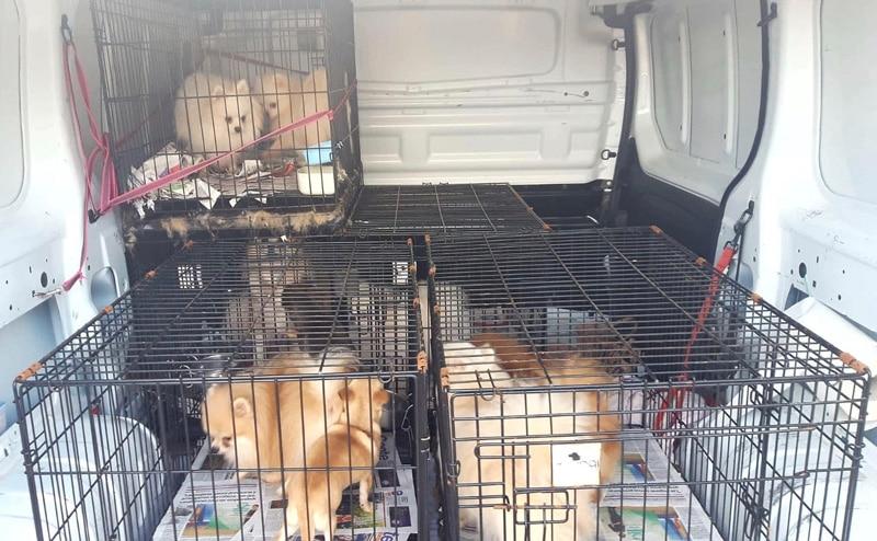 Cachorros rescatados (foto: Rivanimal)