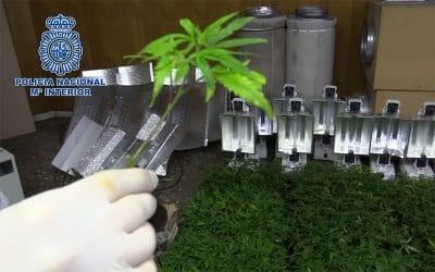 Dos detenidos y 1.700 plantas de marihuana intervenidas en una operación policial en Rivas