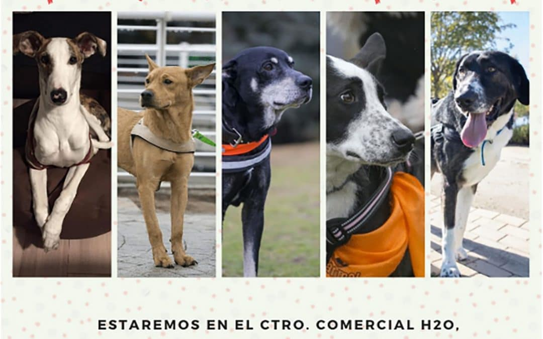 Jornada de adopción canina de Rivanimal