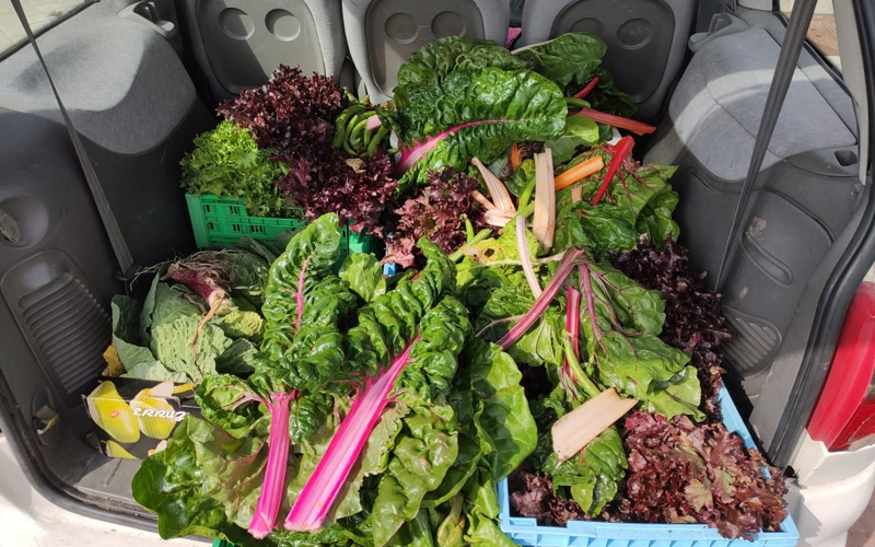Alimentos de los huertos urbanos donados a la Red de Recuperación de Alimentos de Rivas