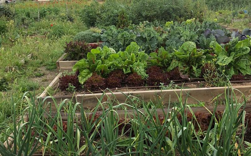 Cultivos en los huertos urbanos de Rivas