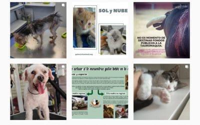 Rivanimal retoma las adopciones de mascotas: visitas a Los Cantiles, con cita previa