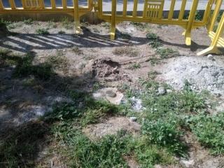 Tala de cipreses junto al cementerio de Rivas (©Diario de Rivas)