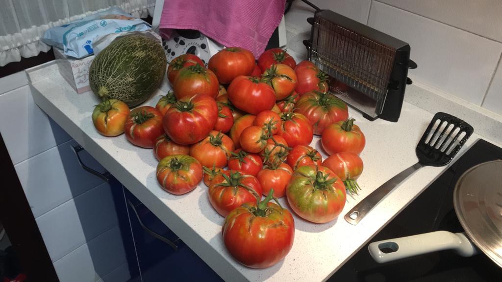 Tomate autóctono producido en los huertos urbanos de Rivas