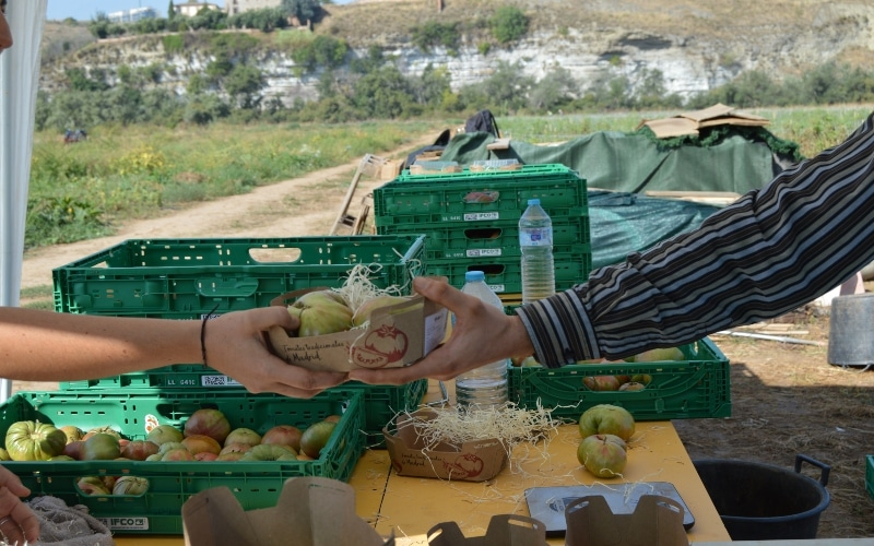 De la huerta de Rivas a la mesa: un proyecto recupera tres variedades de tomates autóctonos de Madrid