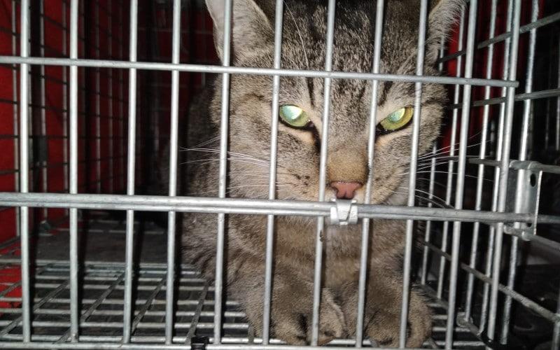 Rescatan en Covibar a una gata que llevaba cerca de 48 horas subida a un árbol de 12 metros