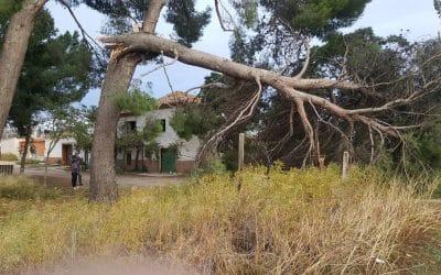 El viento derriba 9 árboles y causa numerosos daños materiales en Rivas